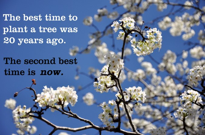 tree blossom quote, the best time to plant a tree was 20 years ago
