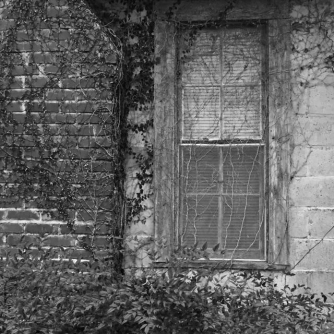 Black and white, vine covered window and chimney