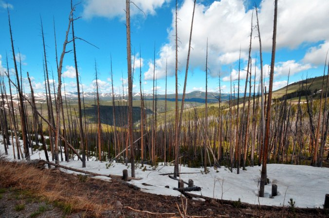 Yellostone National Park snow on the mountain