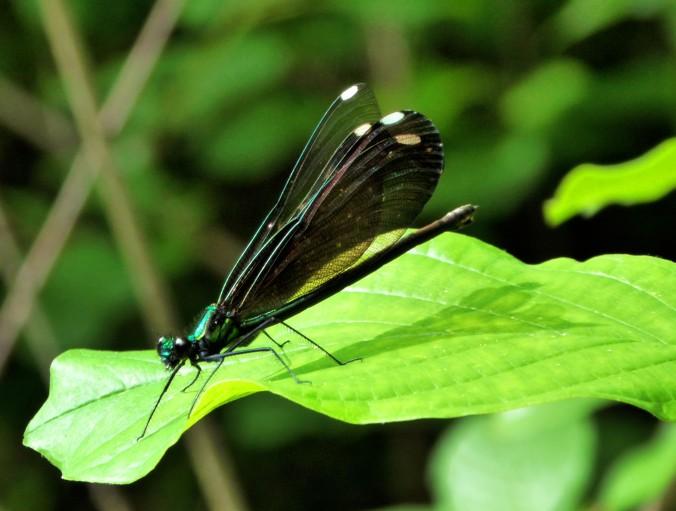 dragonfly on green leaf