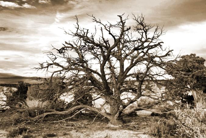 Arizona, desert, tree