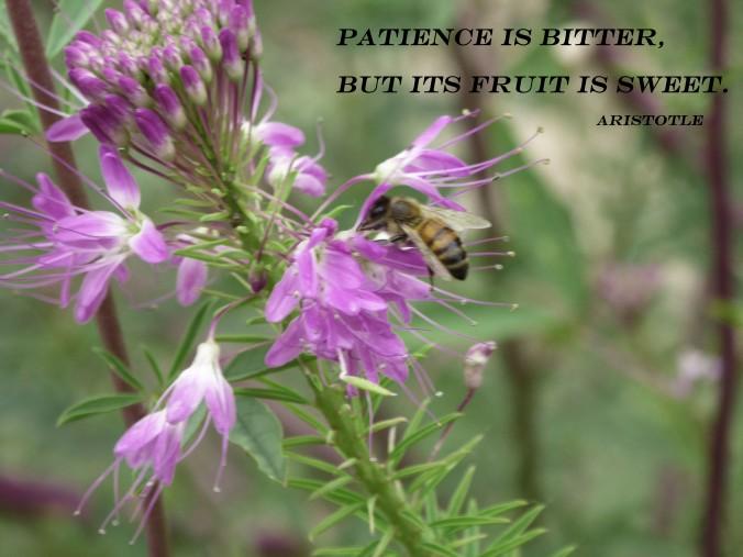 bee on purple flower, Aristotle quote