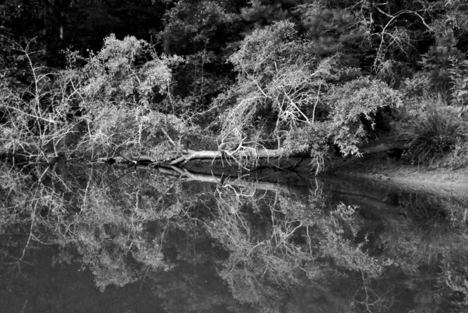 Lake Eufaula, Alabama, black and white, trees, reflection