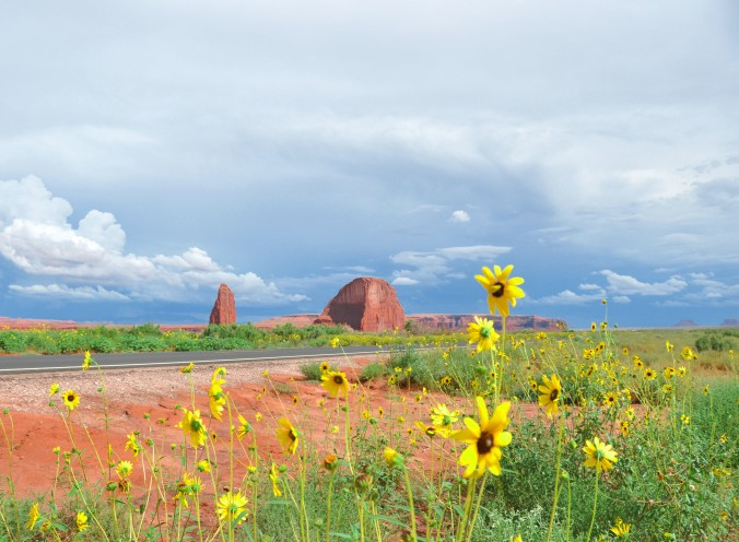 Arizona yellow flowers against butte