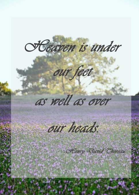 Heaven is under our feet as well as over our heads, henry david thoreau