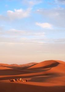 Sahara desert, camels, sunset, Morocco