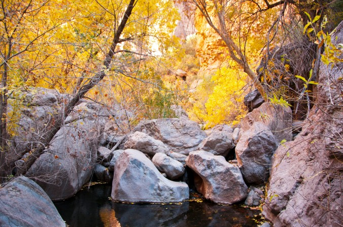 autumn leaves, Arizona