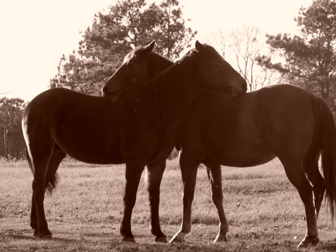 sepia horses hugging