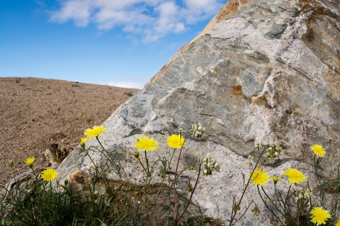 flowers next to boulder, blue sky