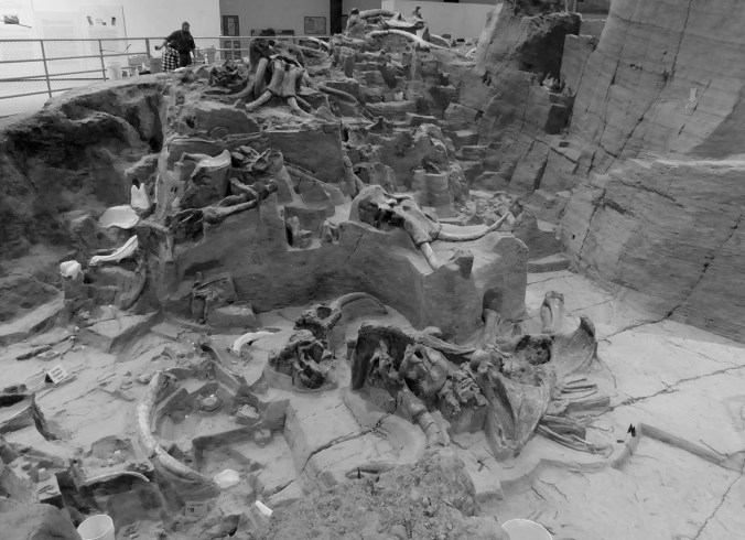 Mammoth site, South Dakota, Hot Springs, black and white, bones, excavation, preservation