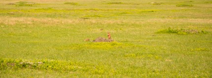 Badlands National Park, South Dakota, prairie dog