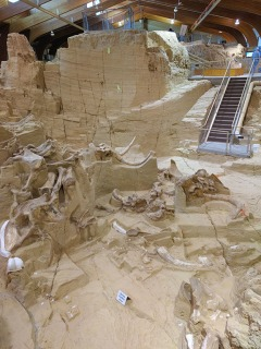 Mammoth Site, South Dakota, archaeology