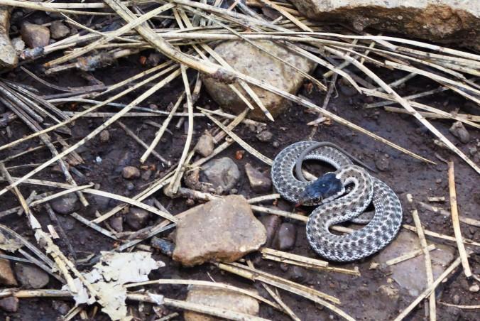 baby snake near rocks