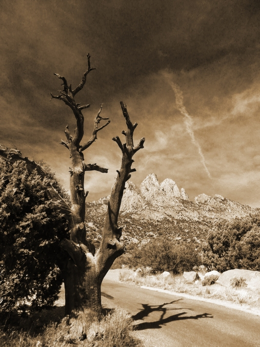 New Mexico, sepia, tree with mountain background