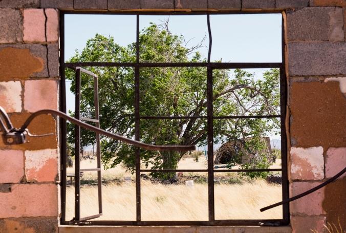 tree framed by window bars, New Mexico roadside
