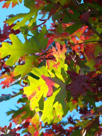 green and red leaves against blue sky