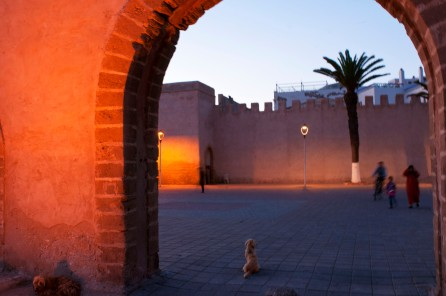 Morocco dogs