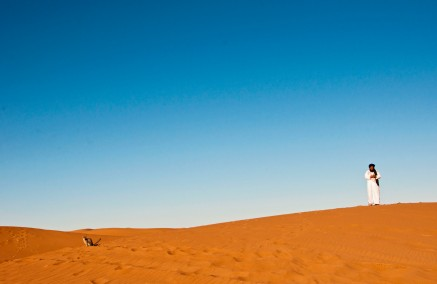 Morocco cat in desert sand