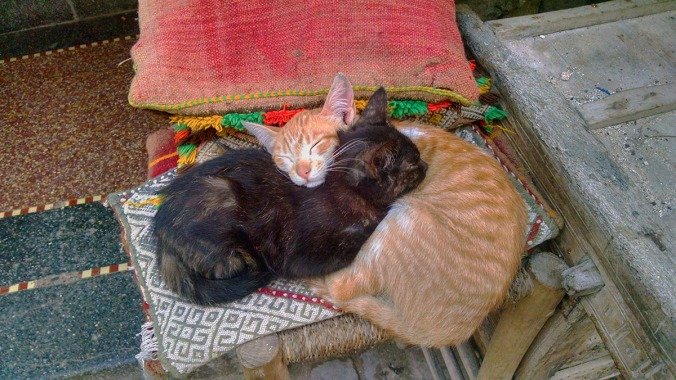 Morocco cats asleep