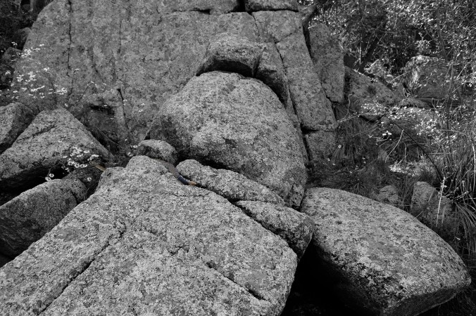 Watson Lake, Prescott Arizona, rattlesnake in boulders, black and white