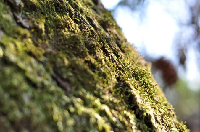 Macro tree bark