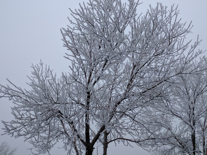 Frost covered trees in Cheyenne Wyoming